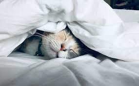 睡眠の質を上げる効果的な3つの方法 | Bauhütte®